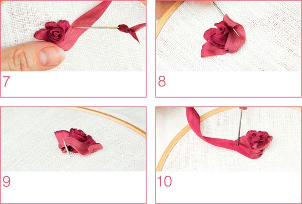 роза комбинированная