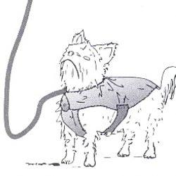 сшить одежду собаке