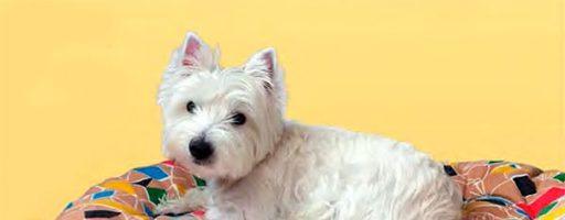 Как сшить лежанку для собаки